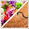 Grupo Olfativo Floral Amadeirado